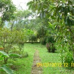 Paved path on the side of the yard. It goes past mango trees and eucalyptus trees.